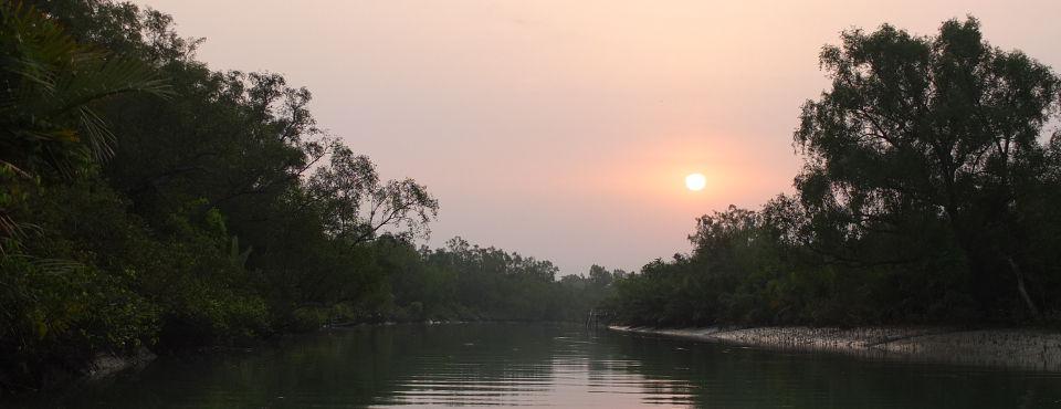 Mangrove Swamps, Bangladesh